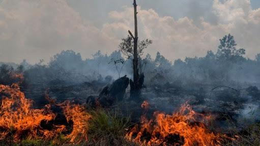 Gambar 3 Petugas Damkar Mamuju Luka Saat Padamkan Kebakaran Lahan