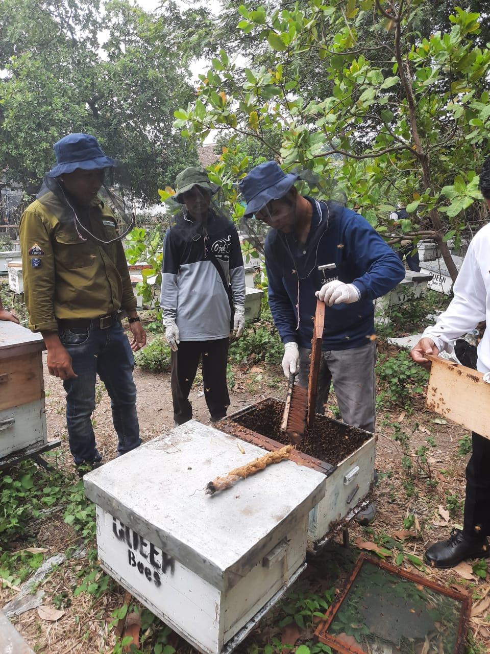 Belajar Budidaya Lebah Madu di KTH Joho Lestari