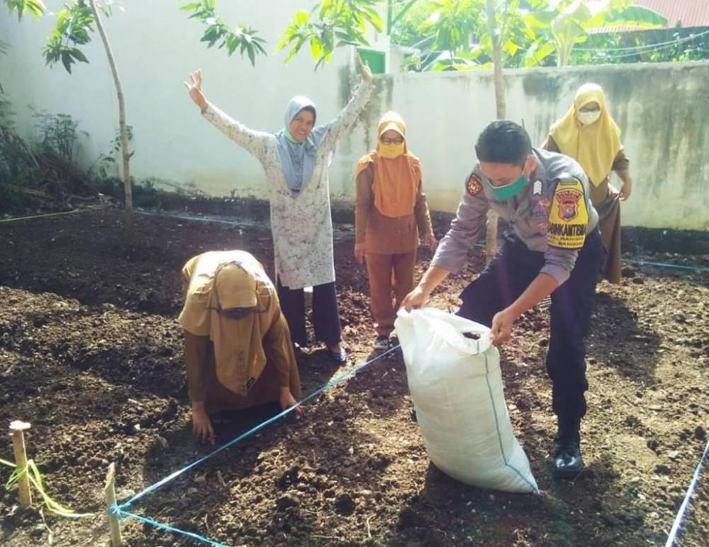 Gambar Dukung Ketahanan Pangan, Bhabinkamtibmas Polres Majene Bantu Garap Lahan Pertanian Warga
